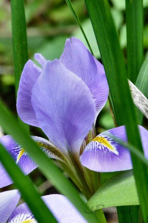 frejus-iris