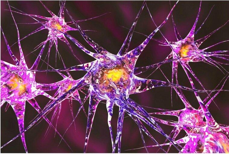 Réseau neuronal