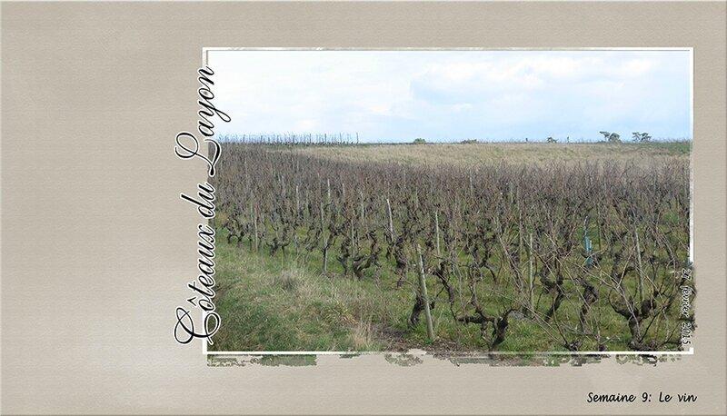 Semaine-9-Le-Vin-Cathy1