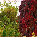 Feuillages automne 0610155