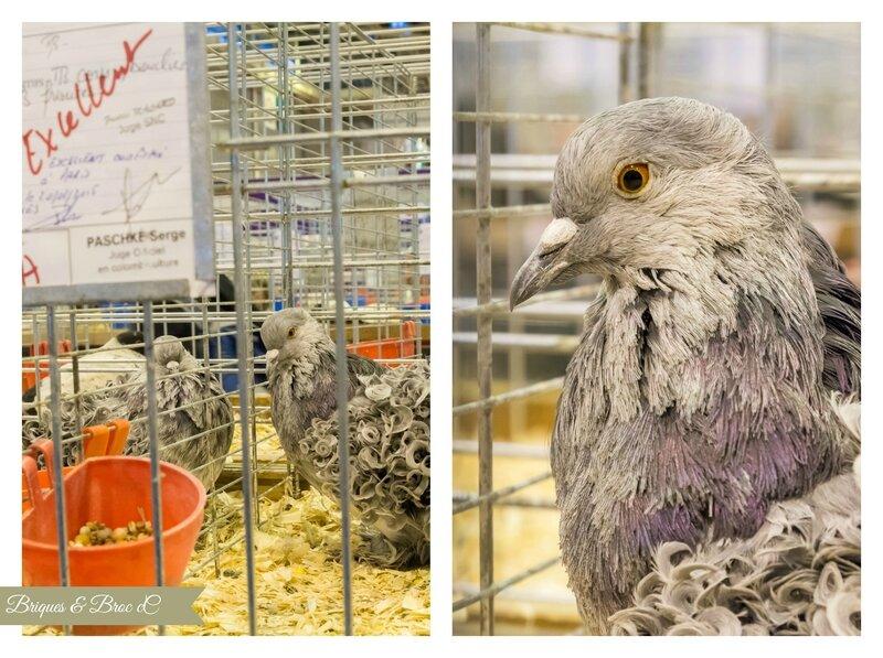 2015 03 03 - Pigeons 1