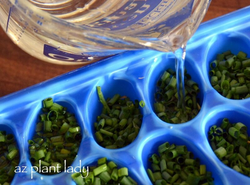 chives_ice_cube_tray-001