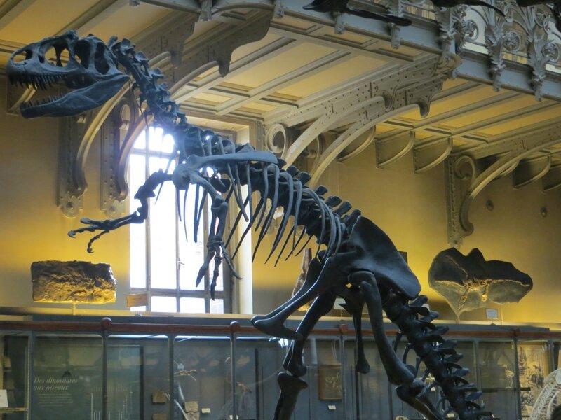 Squelettes de dinosaures et de reptiles ressources pour s 39 amuser ensemble - Jardin des plantes paris dinosaures ...