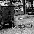 chien_poubelle