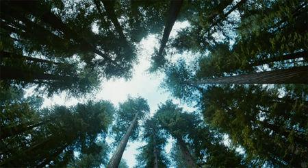 tree_of_life2