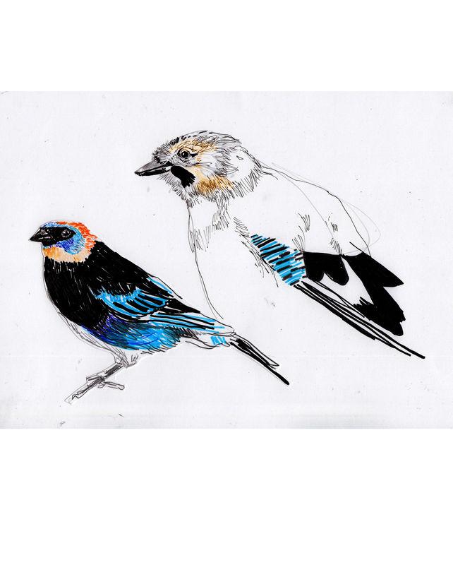 oiseaux_0003