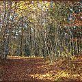 Forêt du Comble Le Poizat (Ain)