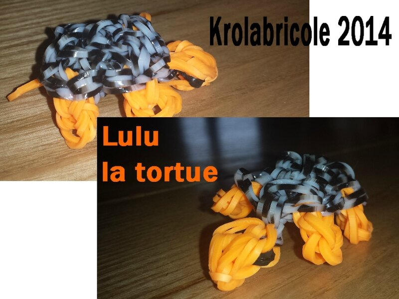 Tortue 2014