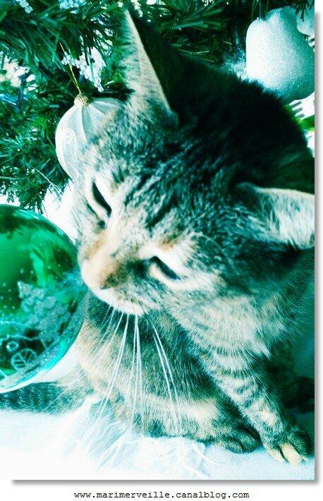 chat de Noël marimerveille