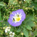 fleurs juillet 2010 042