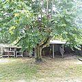 futur poulailler + cabane dans l'arbre pour les enfants