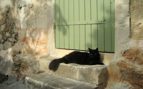 Provence chat 8