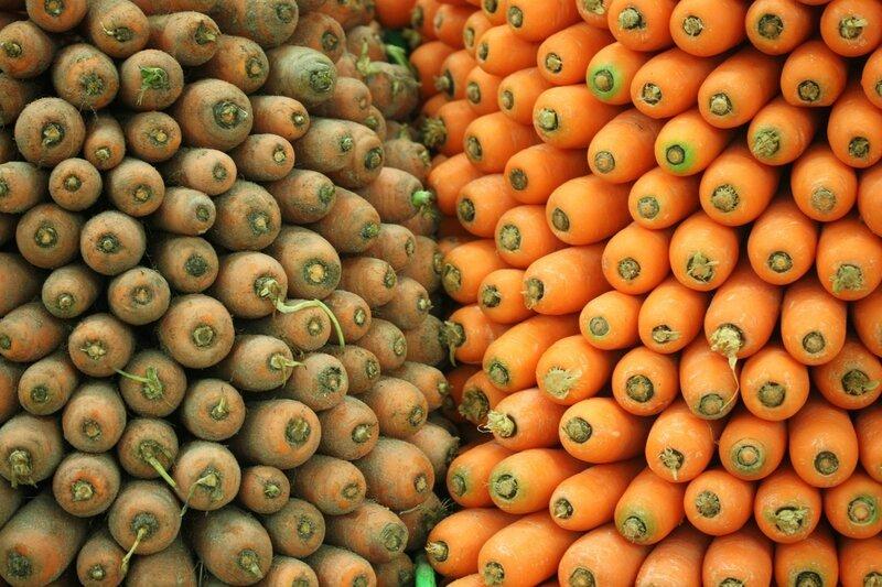 univers primeurs carottes