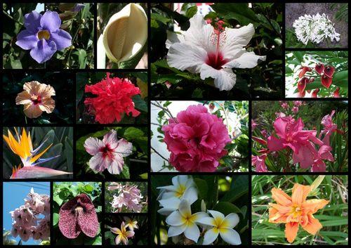 Fleurs exotiques de Madère