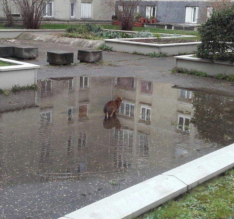 jigouli_les_pattes_dans_l_eau1