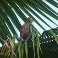 Découvertes ornithologiques
