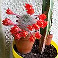Z - cactus