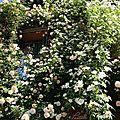 Roses fenêtre_13 06 06_4159