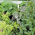 Windows-Live-Writer/Dams-mon-jardin_C73C/DSCN1345