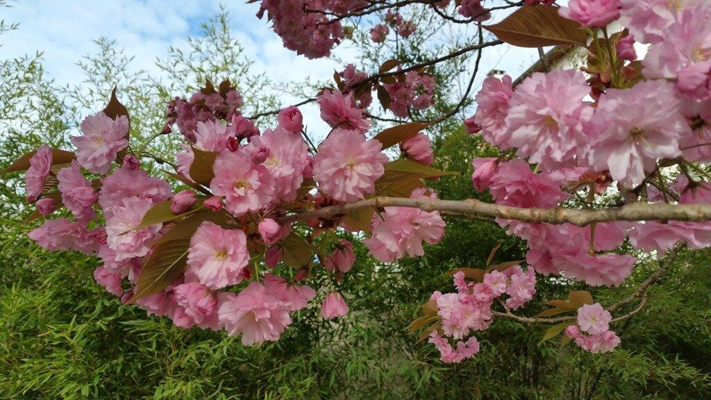 Windows-Live-Writer/Joli-printemps-au-jardin-_601C/20170402_102451_2