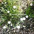 Entre fleur et terre
