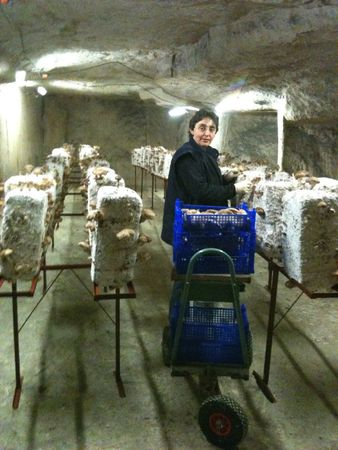Sophie Crépin ramassage shiitaké
