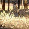 Australie Faune Flore Paysages - janvier 2005 (29)