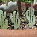 cactus plastique dingue