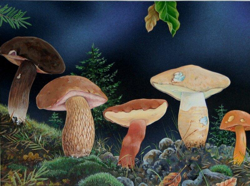 Planche champignon 148 ter