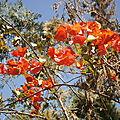 Fleurs et oiseaux en Ethiopie