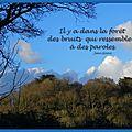 Citation : il y a dans la forêt des bruits qui ressemblent à des paroles. jean giono (1895-1970) - écrivain français