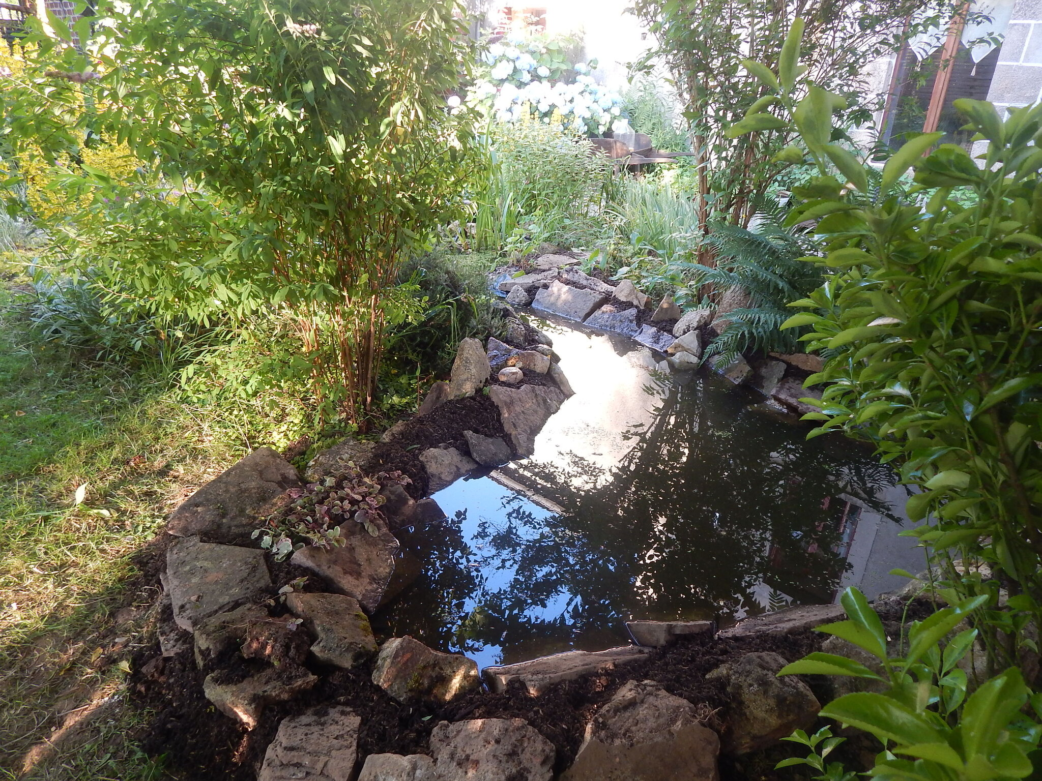 L 39 extension du bassin les jardins de la cat 39 s house - Petit bassin poisson tourcoing ...