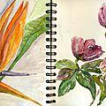 Pages 33 et 34 oiseau du paradis et roses de Noël