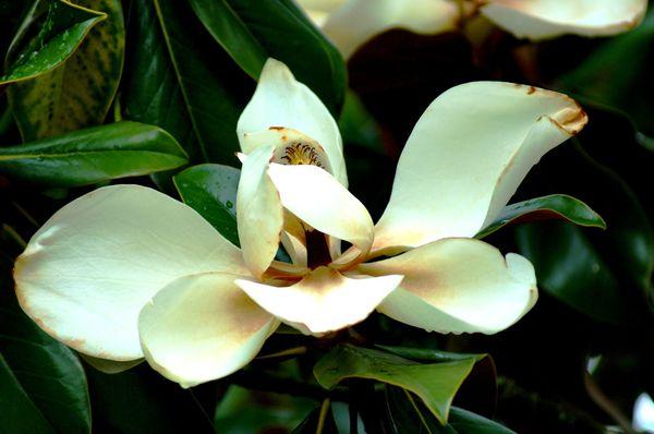 Fleurs du Botanique 064