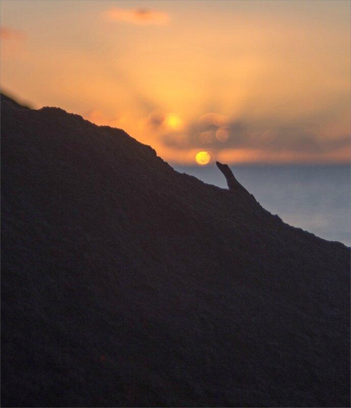 Martinique J7 600 101217 14 lezard soleil