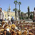 304 - chameaux en peluche pour touristes_resize