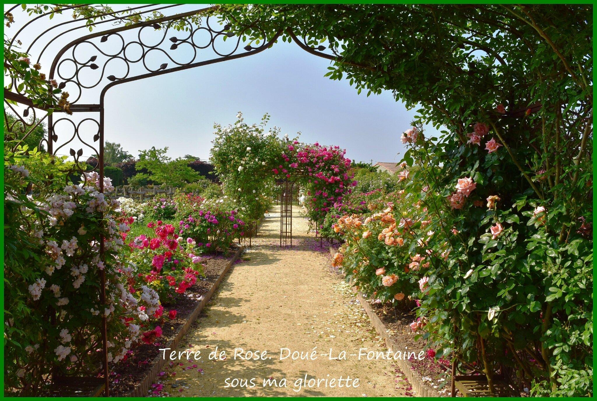 Terre de rose dou la fontaine 49700 sous ma gloriette - Jardin de la rose doue la fontaine ...