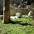 Le zoo de belgrade