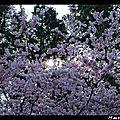 2012_03_30-04