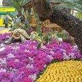 fleurs et agrumes
