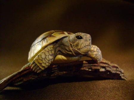 turtle_on_bark_025