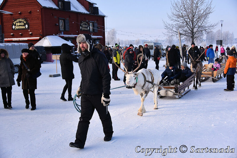 reindeer_rides_for_families_oulu_-12