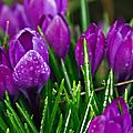 beautiful-spring-flowers-beautiful-flowers-purple-spring