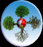 quatre_saison_arbreB