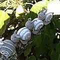 Le retour des escargots...