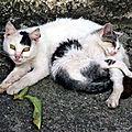 [grif' auteurs] vous croyez que la vie d'une chatte errante est un chemin de roses? par véronique gauthier