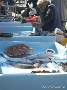 Marseille_MarchePoissons_poissonniere