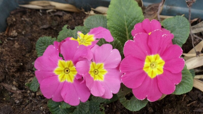 jardin printemps 005