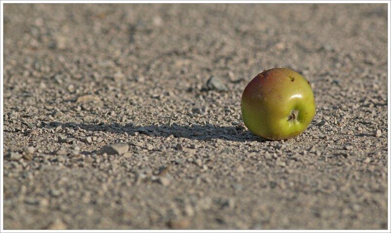 ville pomme ombre 300715