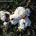 Les blobs ni plante ni-animaux ni champignon...